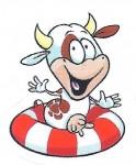 Krávy2