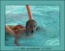 První plavání 2014