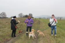 Venceni psu v Dobranově 16.11.2012