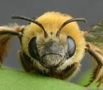 Vyprávění o včelách.
