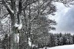 Lyžařský kurz 2017